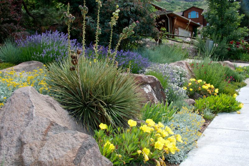 Drought tolerant plants with boulders.