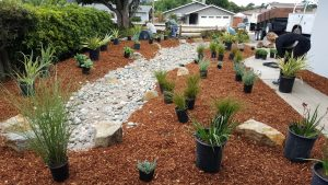 Placing plants for a rainwater catchment landscape in San Luis Obispo, CA