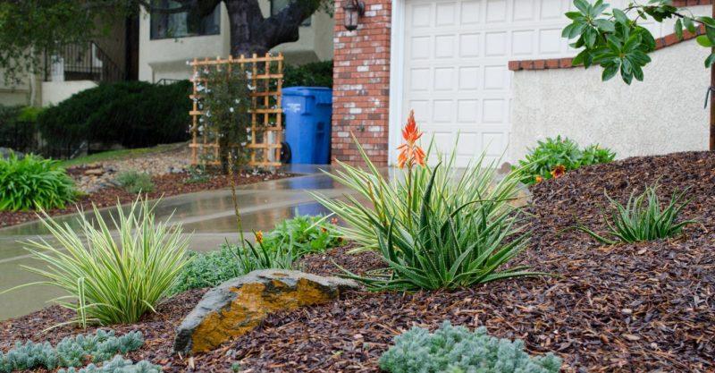 Drought tolerant plants in San Luis Obispo Landscape