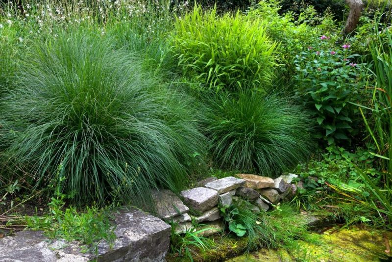 How to care for your ornamental grasses wild bloom for Ornamental grasses that bloom