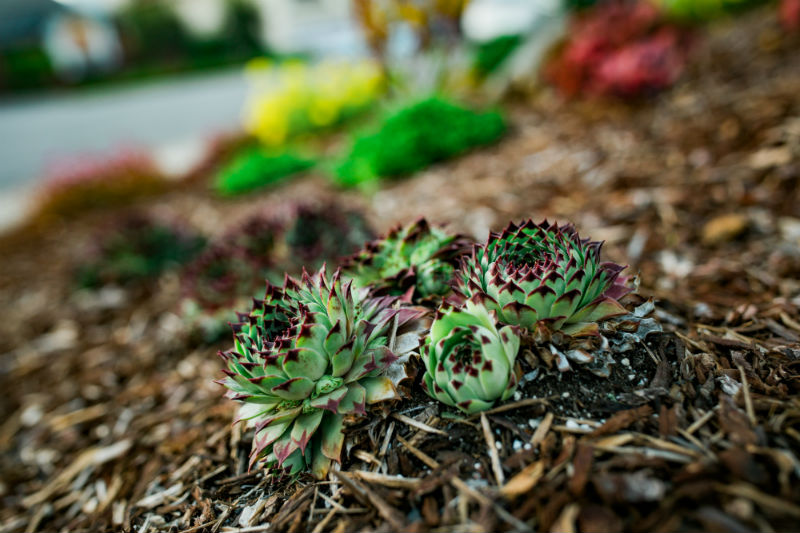 Outdoor Succulent Garden Ideas Succulent Landscaping Wild Bloom
